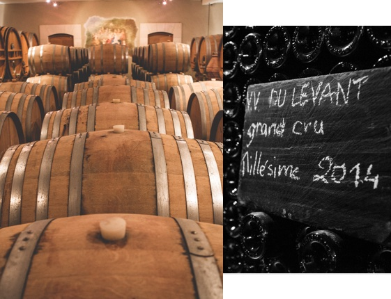 champagne-larmandier__elevage--levant